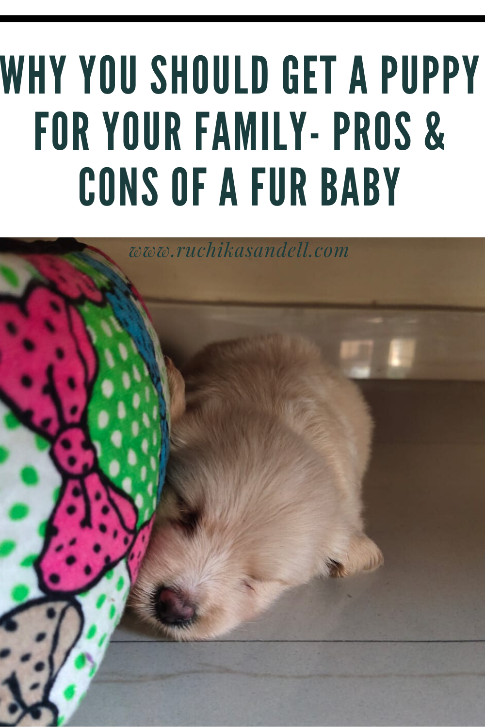 Why you should get a pet for your family – Pros and Cons of a Fur Baby!